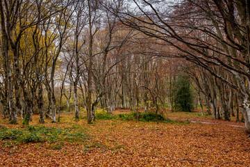 Foresta in autunno con rami spogli e foglie a terra