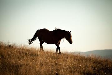 silhouette di un cavallo in una prateria
