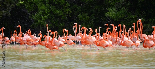 Foto op Canvas Flamingo pink flamingos