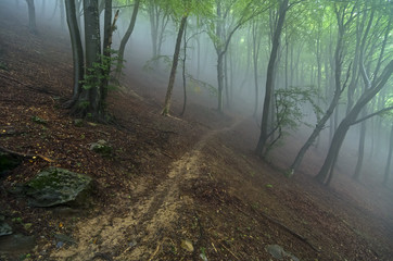 Mountain trail in the fog