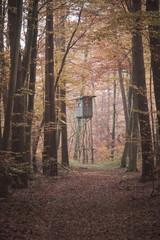 Herbstliche Waldidylle
