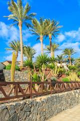 Palm trees in tropical gardens, Morro Jable, Fuerteventura