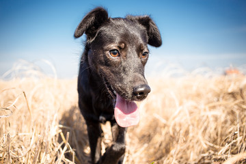 Black mixed breed dog  outdoor portrait