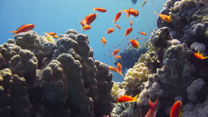 Tropical Fish and Coral Reef