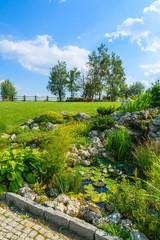 Plants around a water pond in garden on sunny summer day, Poland