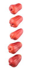 The exotic rose apple fruit over white background