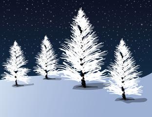 White Pines at night