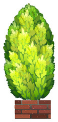 A tall decorative houseplant