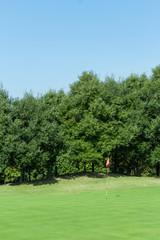 ゴルフ グリーン