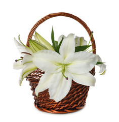 White lily in a basket