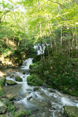 Mountain stream of Shimotaki