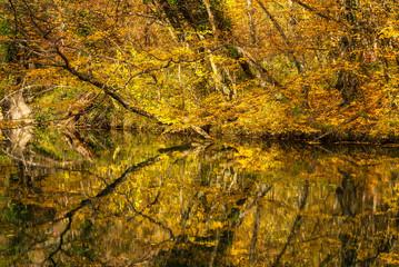 Lake in autumn forest. Autumn landscape