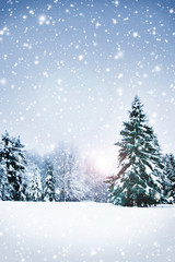 Winter nature landscape. Snowy forest background