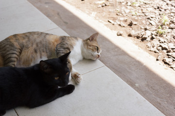 Two cats lying on the ground.