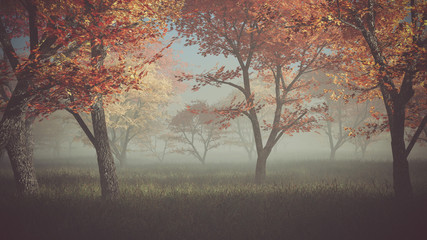 Autumn forest in the mist.