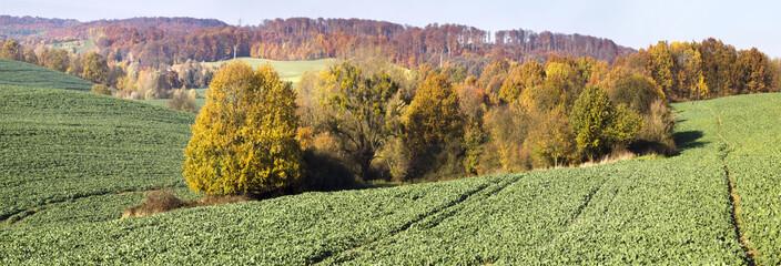 panorama jesiennego pola