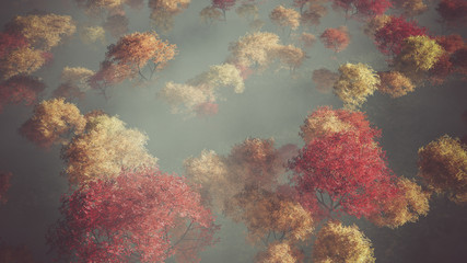 Aerial of autumn forest in the mist.