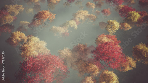 Aerial of autumn forest in the mist. - 73561299