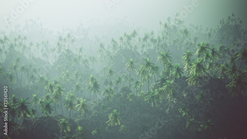 Aerial of palm forest in the mist.