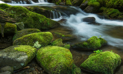 River and stones with moss. Natural background