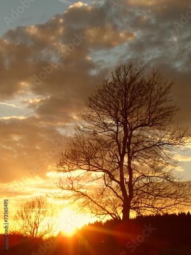 canvas print picture Herbstbaum vor Sonnenuntergang