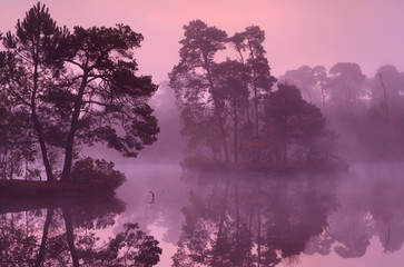 trees on lake surface at sunrise