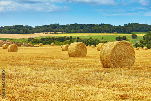 Golden hay bales in countryside - 73568061