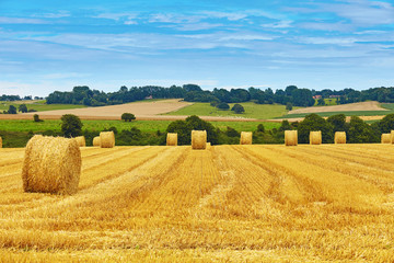Golden hay bales in countryside