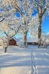 Garden winter path