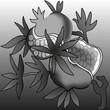 Ripe pomegranate illustration background gray monochrome