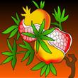 Ripe pomegranate illustration colorful background dark