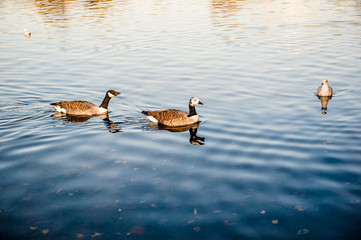 uccelli al lago