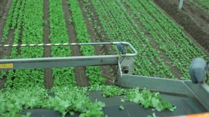 Raccolta azienda agricola