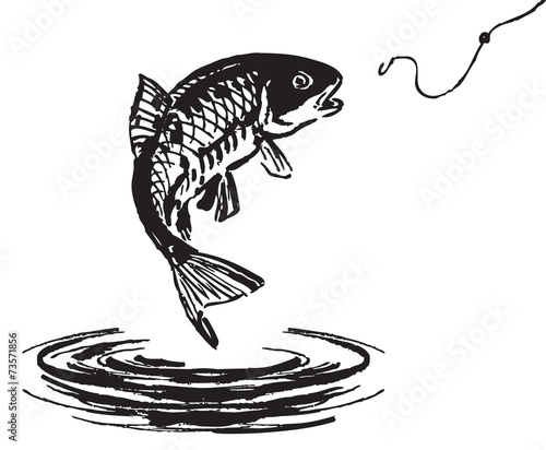 Fish jumping out of the water - 73571856