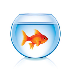 Goldfish in bowl isolated on white vector