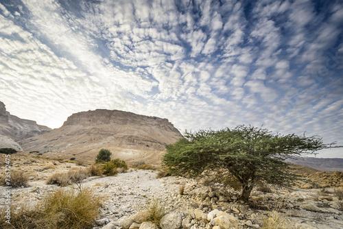 Fotobehang Midden Oosten Masada, Israel