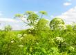 Grass Meadow Horizon