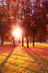 Sunlit Foliage Fall Wallpaper