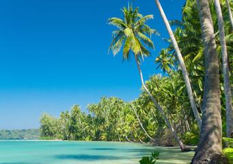 Palm Panorama Serenity Shore