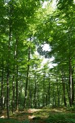 Leśny spacer 5