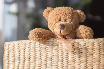 Teddy guckt aus dem Korb