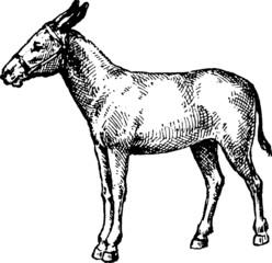 Vintage image ranch donkey