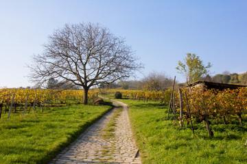 Herbst in den Weinbergen/Wien Stammersdorf