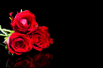 red roses  flower with reflection on black surface background