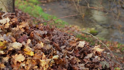 Old autumn leaves near river