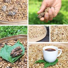 collage coffee luwak coffee beans luwak