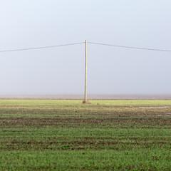 beautiful green meadow in heavy mist