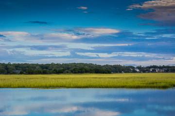 Green Grassy Marsh in the Morning