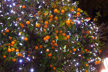 Christmas tangerines with lights in Athens