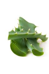 green leaf aloe vera